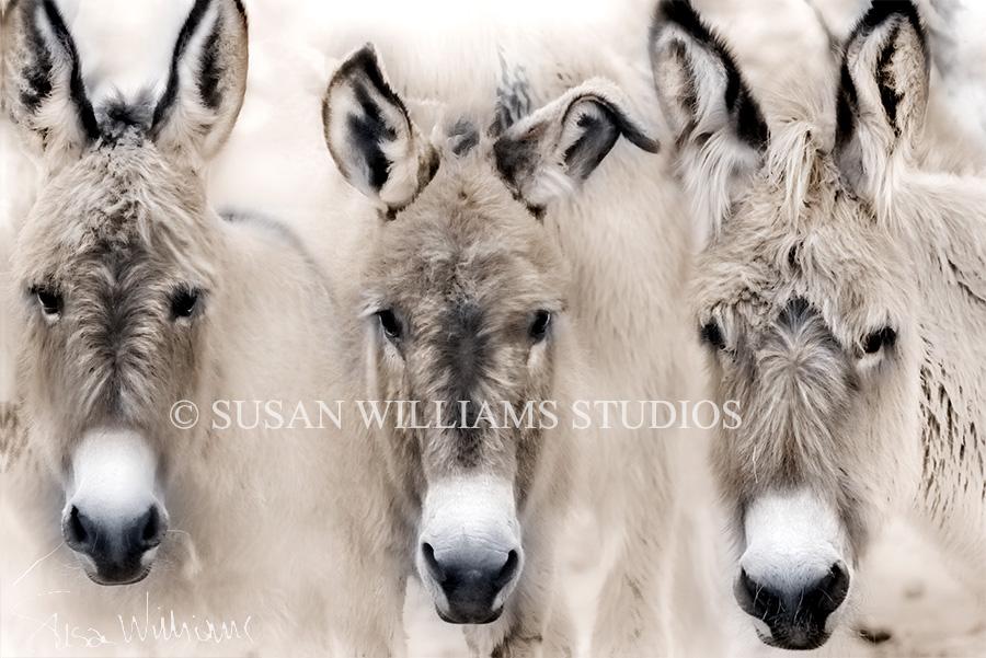 3 burros