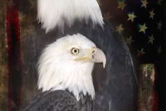 eagles_flag