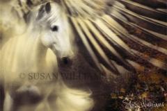 eagle pegasus2